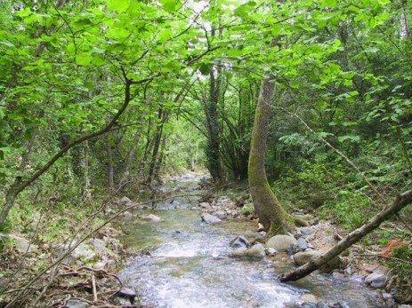 Preservação da flora e fauna